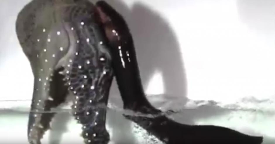 La anguila eléctrica ataca con más fuerza fuera del agua. (Captura de pantalla: SciNews/YouTube)
