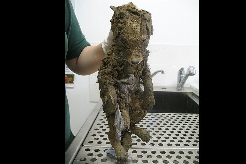 Los rescatadores sabían que tenían que darse prisa si querían salvar la vida de este irreconocible animal cubierto de barro. (Foto: boredpanda.es)