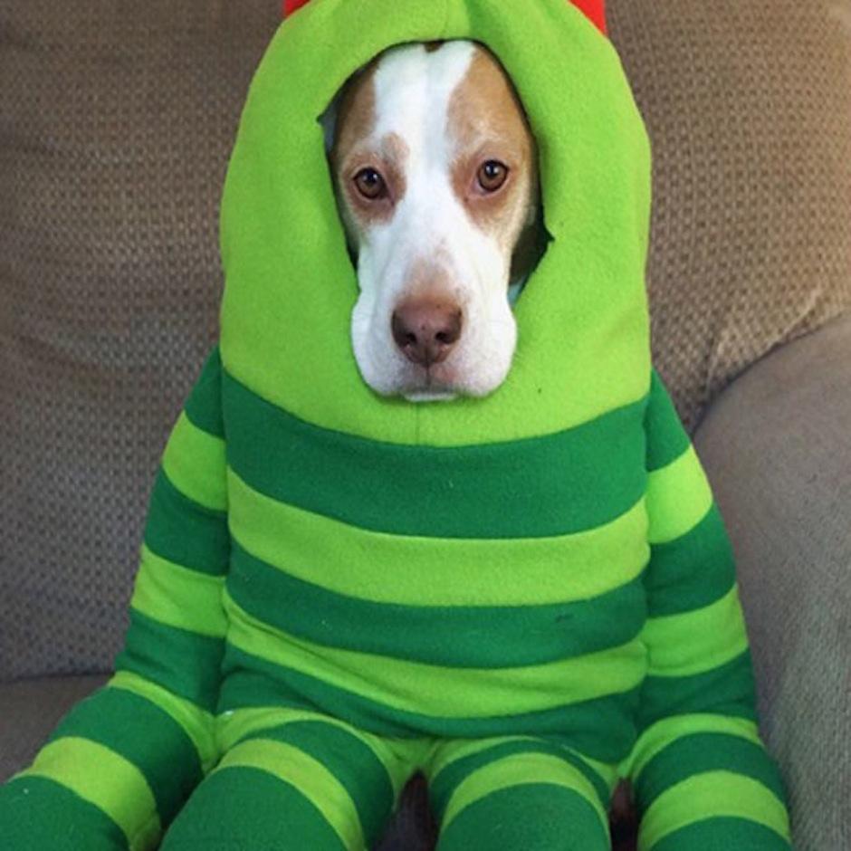 Maymo, el perro del disfraz. (Foto: atresmedia.com)