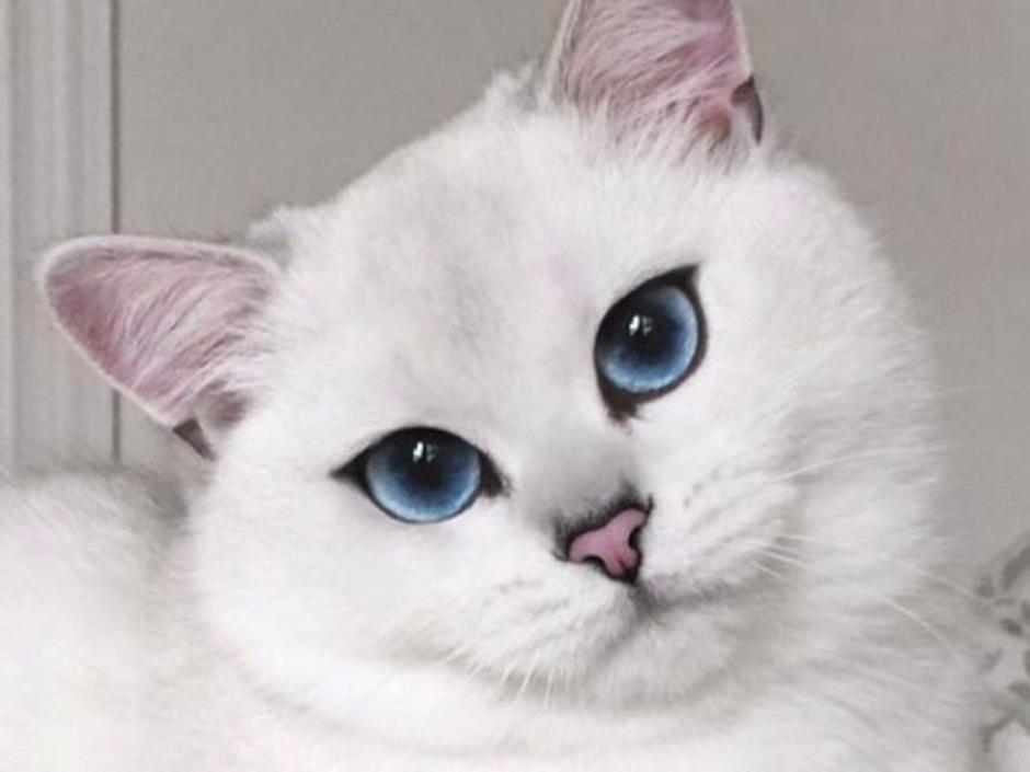 El gato con los ojos más lindos del mundo. (Foto: atresmedia.com)