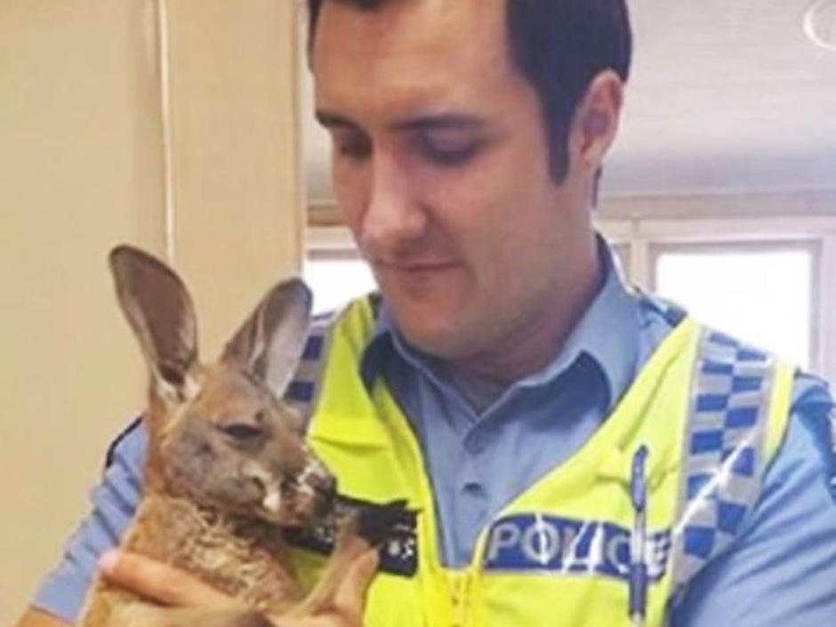 El canguro que piensa que el policía es su padre.  (Foto: atresmedia.com)