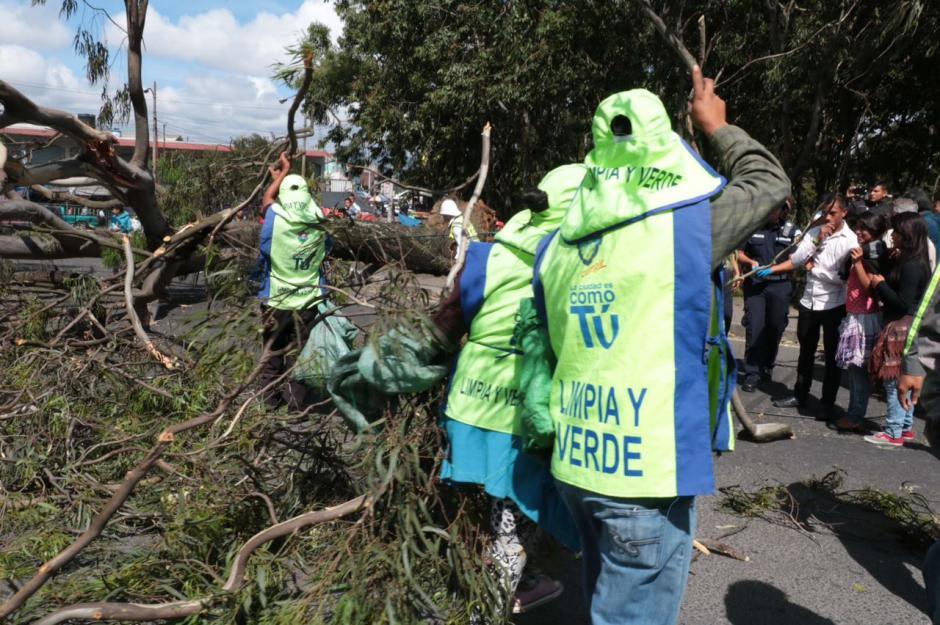 La caída del árbol no provocó heridos pero ha generado mucho tráfico vehicular.  (Foto: Amílcar Montejo)