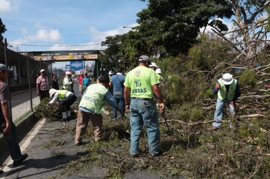 Un árbol cayó en el Trébol zona 11 y generó caos vehicular. (Foto: Amílcar Montejo)