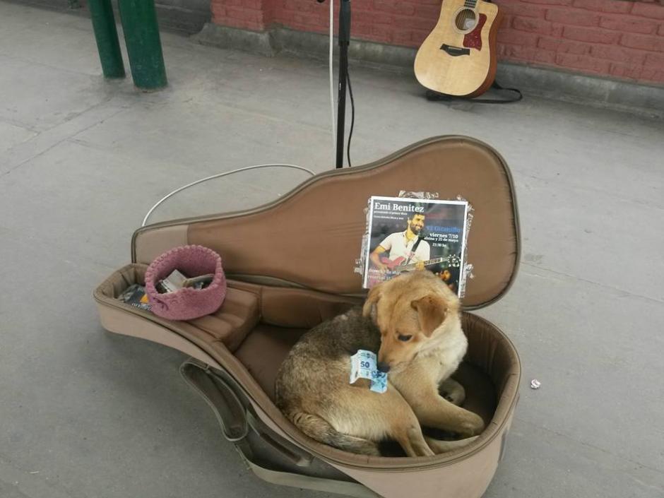 Emi deja que los perros sin hogar descansen en la funda de su guitarra durante sus presentaciones. (Foto: Facebook/Emi Benitez)