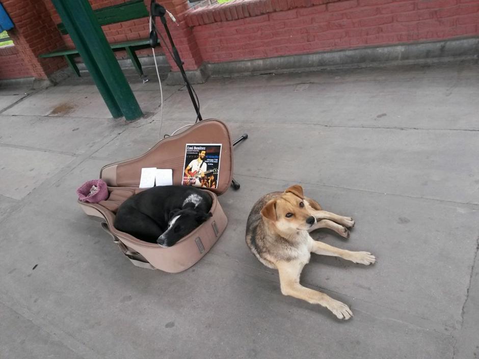 Negrita y otro cachorro acompañan al artista durante una de sus presentación. (Foto: Facebook/Emi Benitez)
