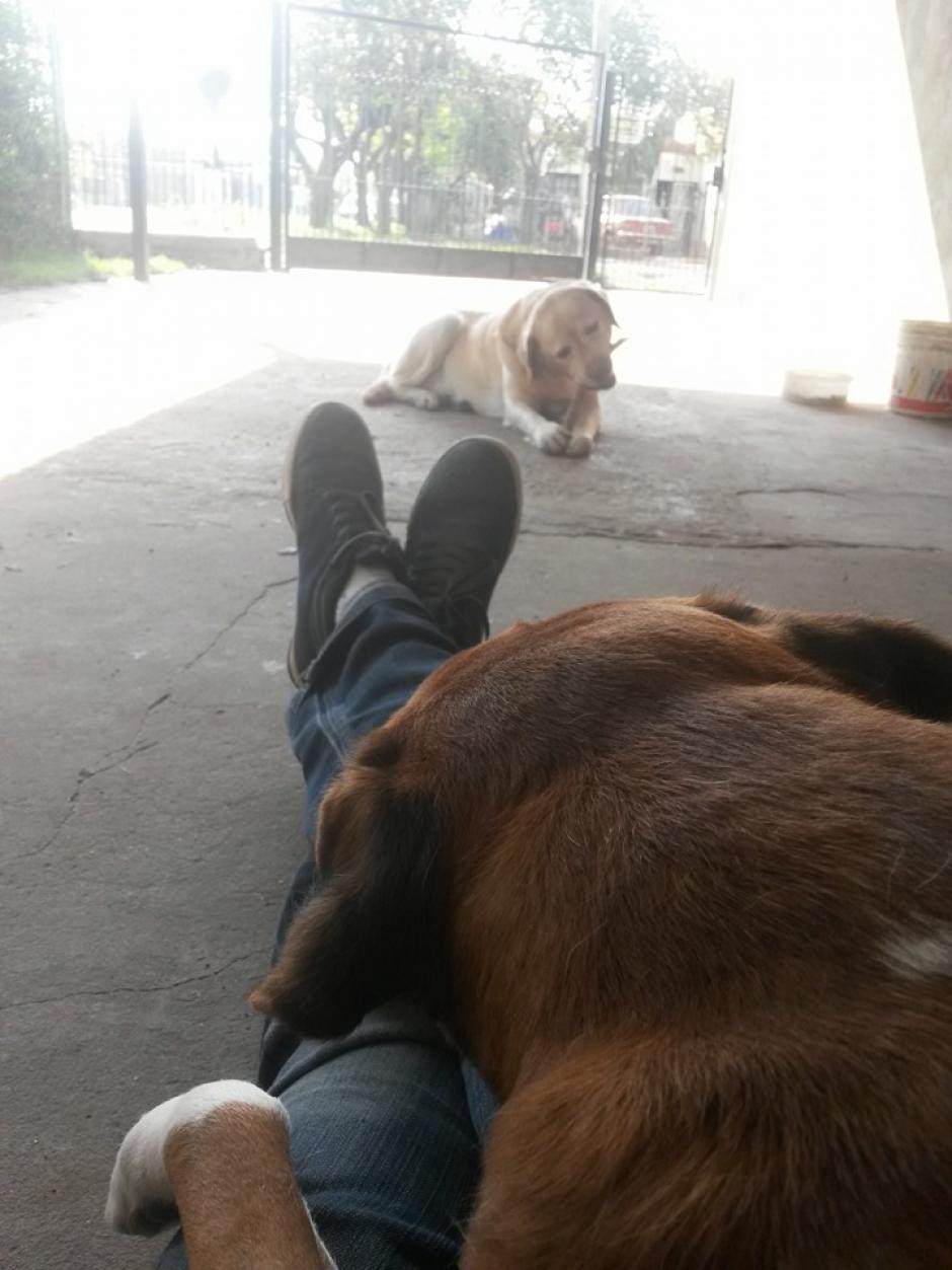 El artista urbano Emi Benitez, siente un especial afecto por los perros. (Foto: Facebook/Emi Benitez)