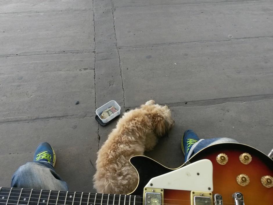 Distintos perros sin hogar acompañan a Emi en sus presentaciones en la calle. (Foto: Facebook/Emi Benitez)