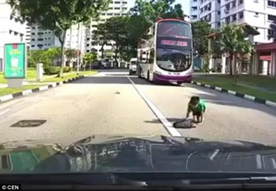 El estudiante cae sobre la carretera y se levanta desorientado. (Imagen: Daily Mail)