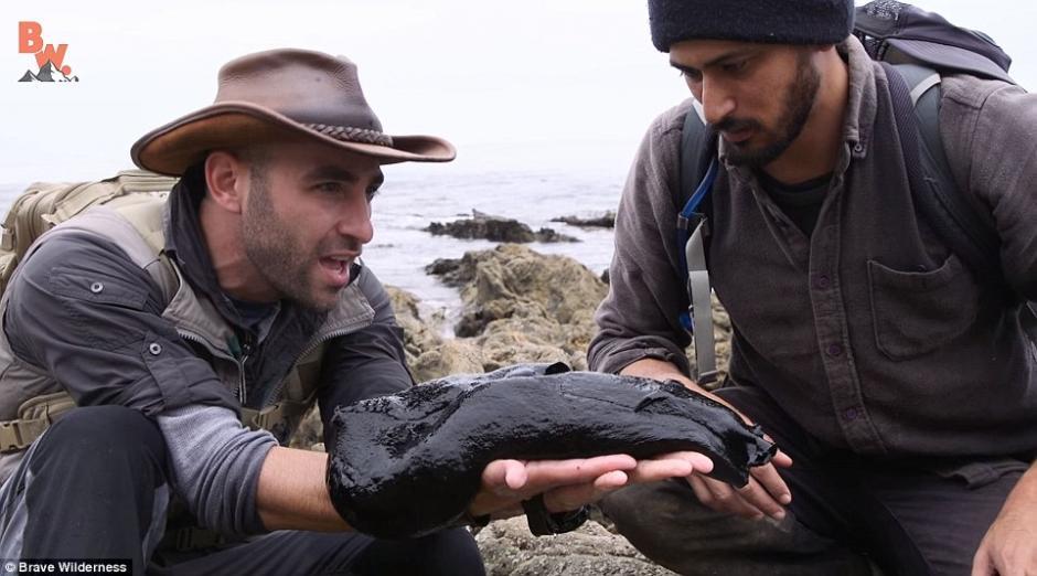 El extraño hallazgo fue efectuado en una playa de Estados Unidos. (Foto: Daily Mail)