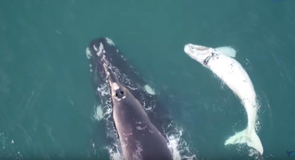 Las imágenes fueron filmadas por un dron en las costas de Australia. (Imagen: captura de YouTube)