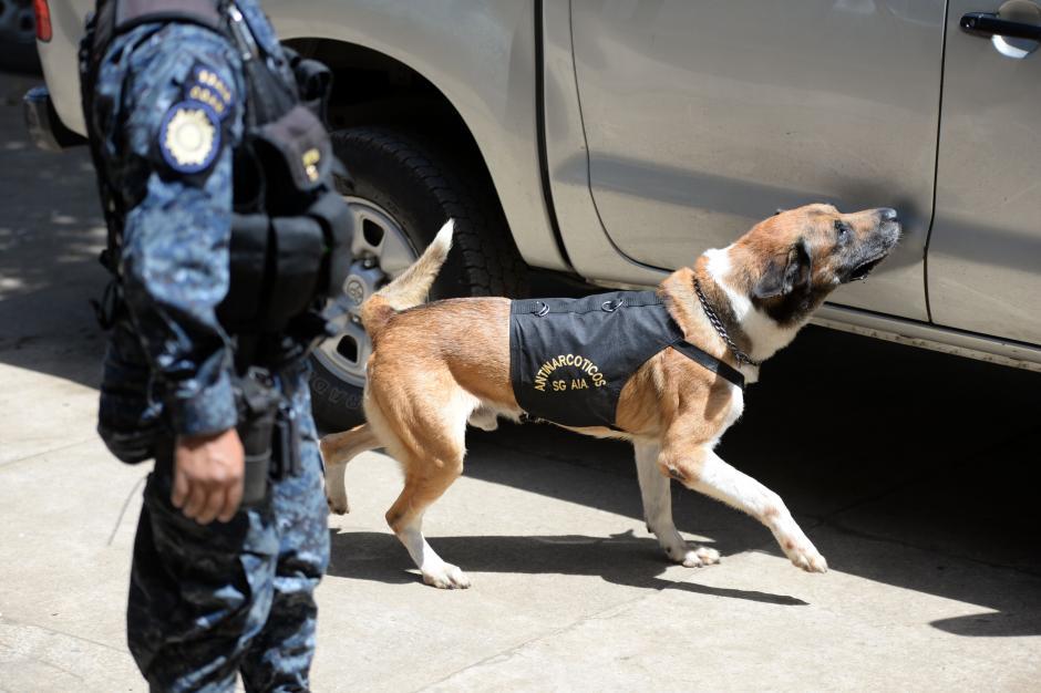 Sam es uno de los agentes veteranos que buscan drogas, tiene 7 años de servicio. (Foto: Esteban Biba/Soy502)