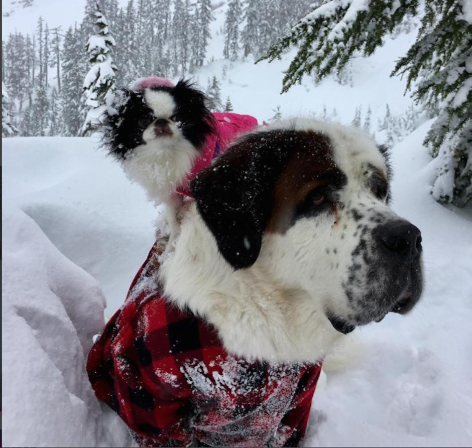 Blizzard carga sobre su lomo a Lulu la mayor parte del tiempo. (Foto: Instagram/blizzardandlulu)