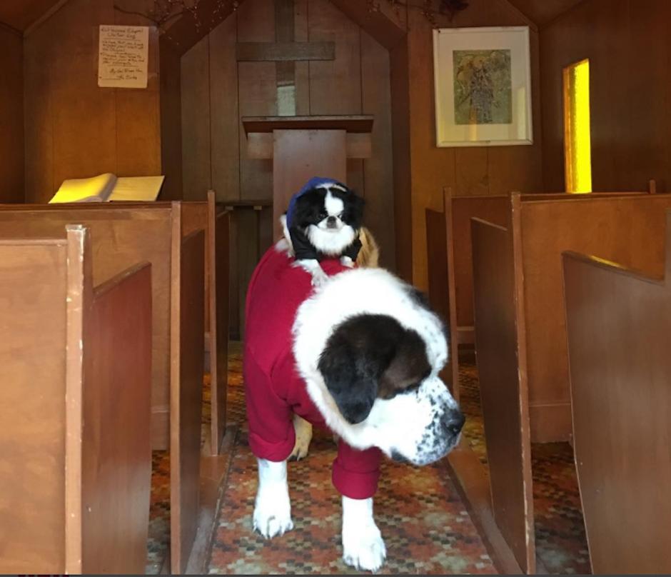 Haste en la iglesia Lulu viaja sobre Blizzard. (Foto: Instagram/blizzardandlulu)
