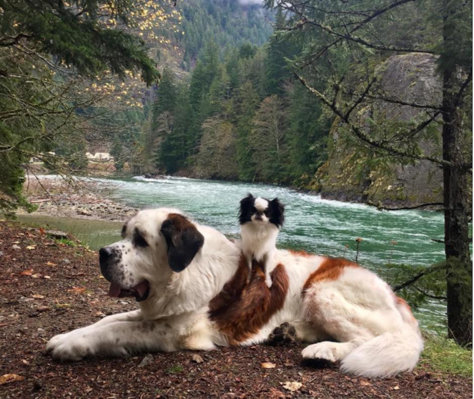Según su dueño, Blizzard es un perro muy noble. (Foto: Instagram/blizzardandlulu)