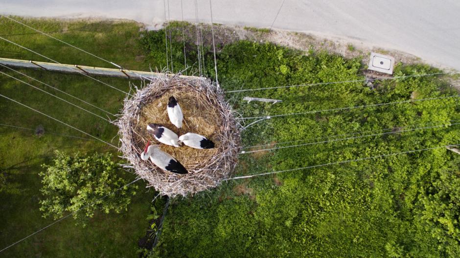 Una familia de cigüeñas descansan en su nido ubicado en la cima de un poste de tendido eléctrico. (Foto: Myszon/dronestagram)