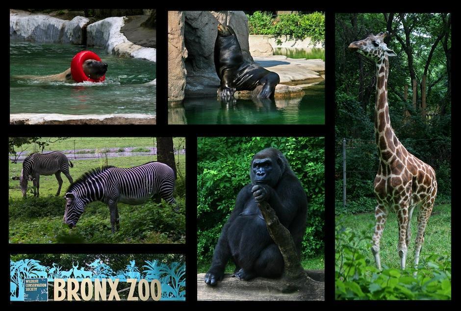 El Zoológico del Bronx fue inugurado en 1899 y alberga más de 4 mil animales. (Foto: newyorkdailyphoto.com)