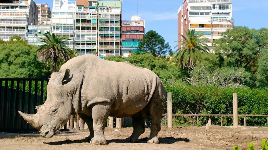 Ubicado en el barrios de Palermo, el Zoológico de Buenos Aires, cuenta con 2,500 especies y se enfoca en la fauna argentina. (Foto: expedia.es)