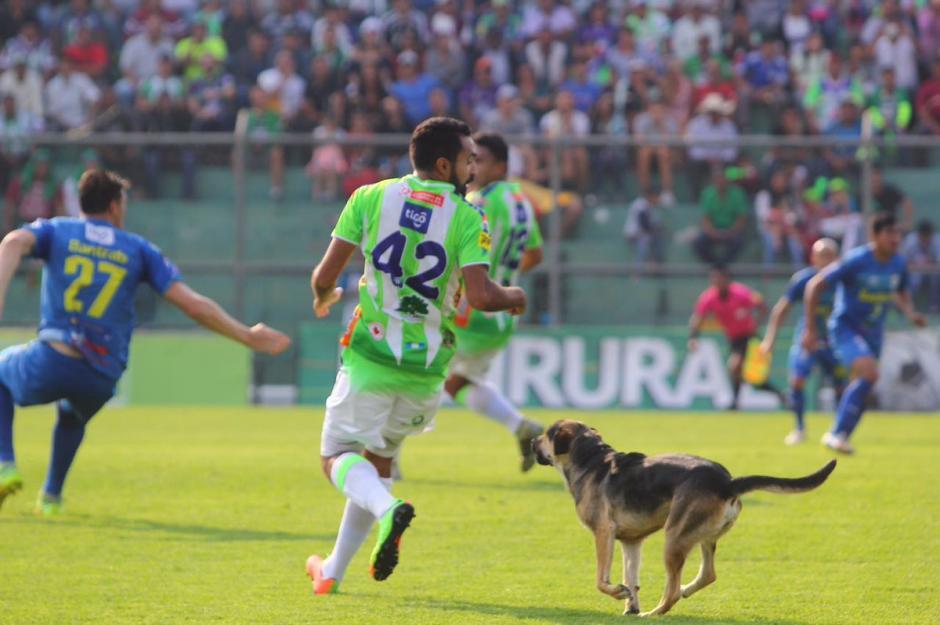 El can fue el centro de atención en el último juego del equipo antigüeño como local. (Foto: Antigua GFC)