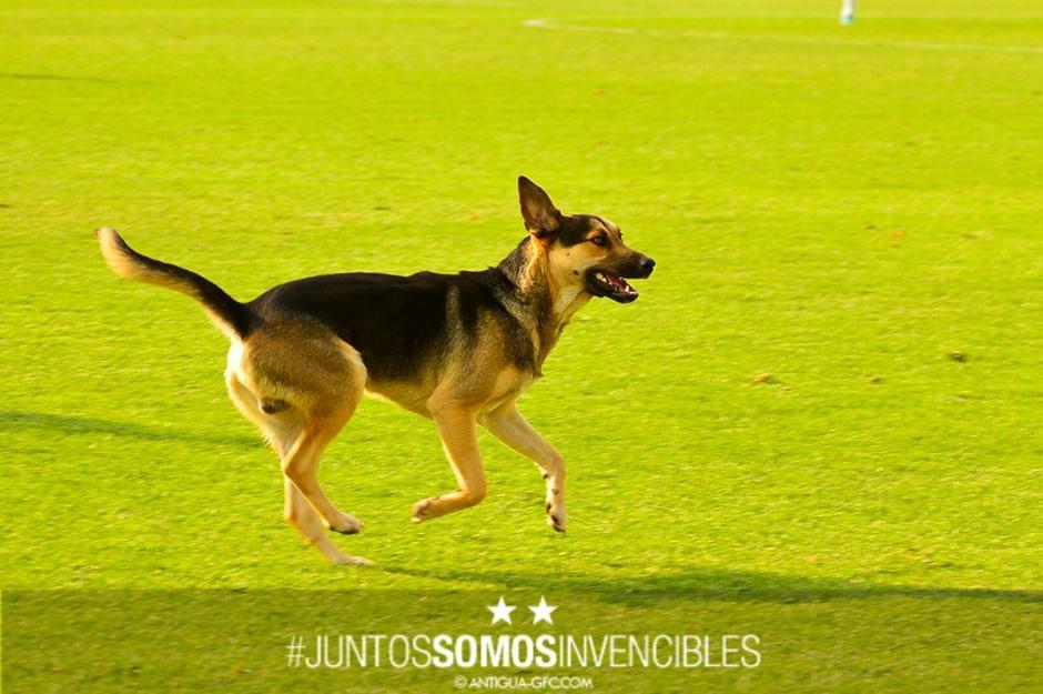 El equipo Antigua se muestra solidaria con las mascotas. (Foto: Antigua GFC)