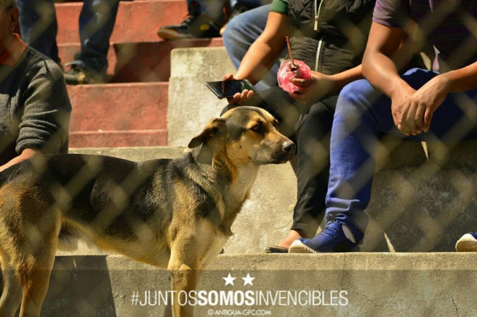 El perrito observa desde las gradas el partido de los aguacateros. (Foto: Antigua GFC)