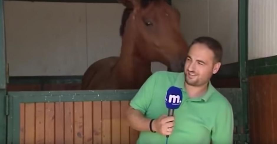 El caballo lo acaricia cada vez que puede. (Captura de pantalla: Amazing Amazing)