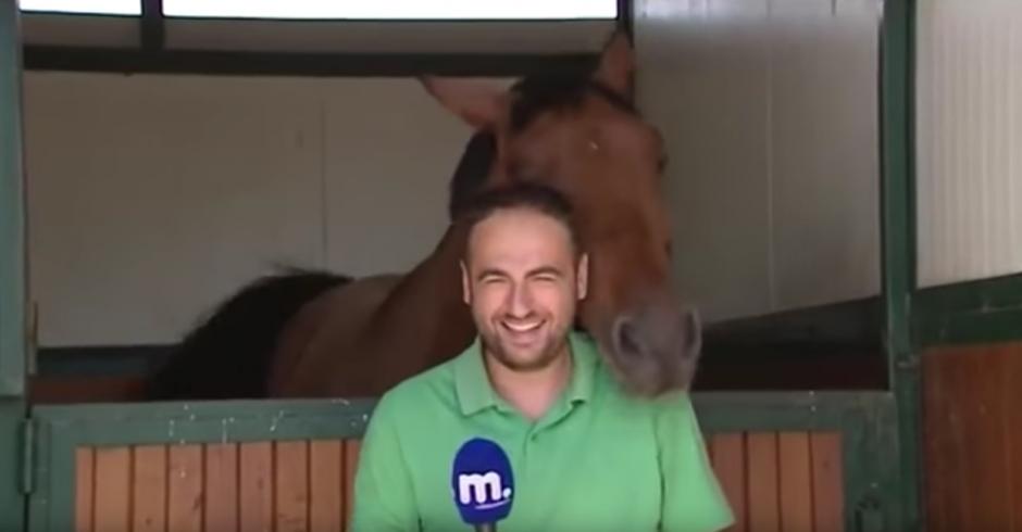 El caballo se llama Frankie. (Captura de pantalla: Amazing Amazing)