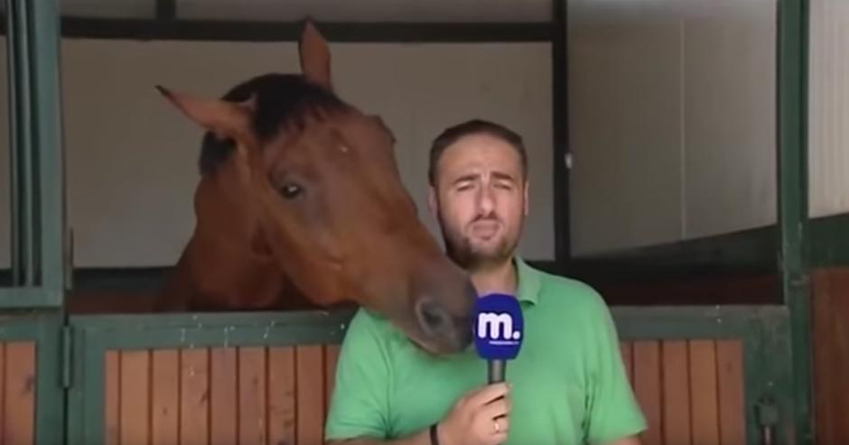 Frankie es cariñoso con el reportero. (Captura de pantalla: Amazing Amazing)