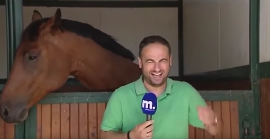 El periodista no se contiene la risa tras las caricias de Frankie. (Captura de pantalla: Amazing Amazing)