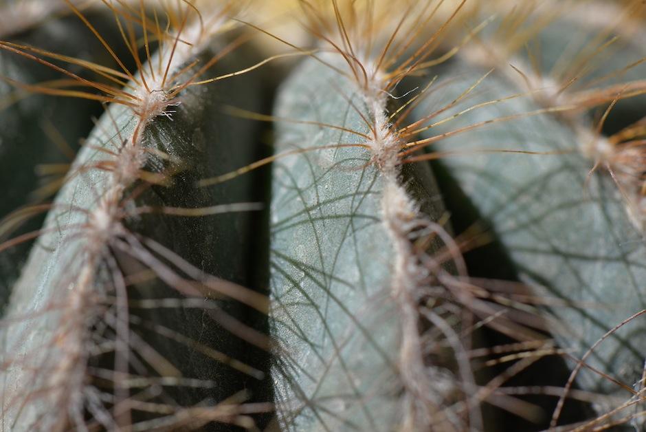 Las espinas les ayudan a protegerse de sus depredadores. (Foto: Wilder López/Soy502)