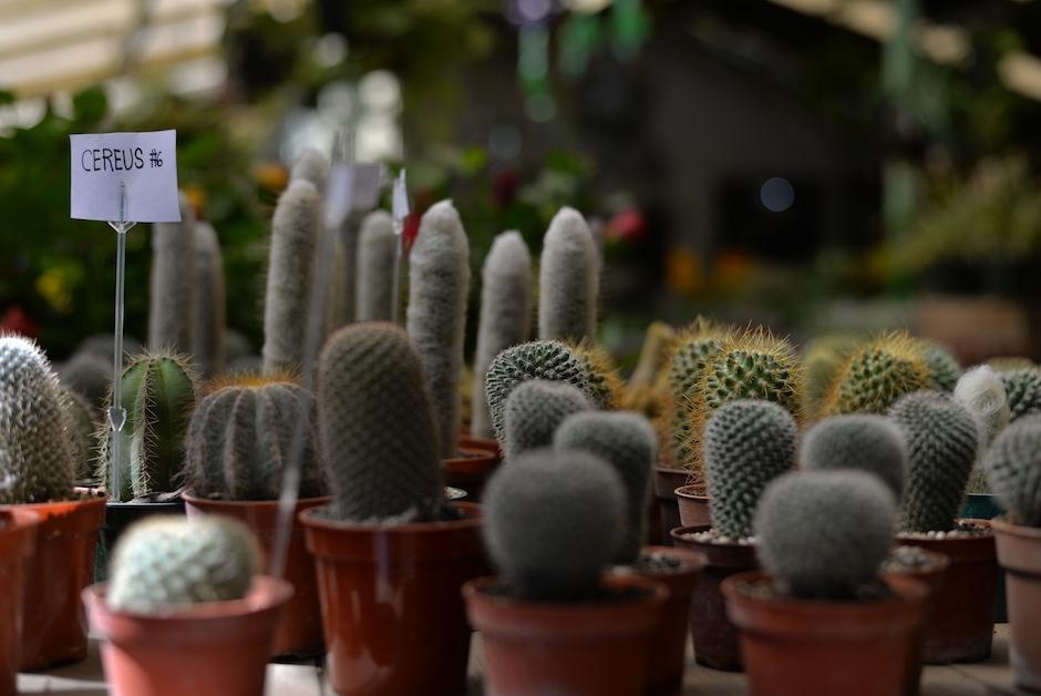 Este es el diverso mundo de los cactus. (Foto: Wilder López/Soy502)