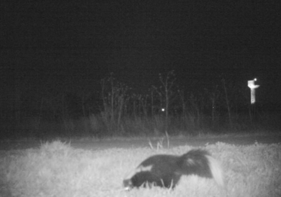 Al principio del video solo se observaron animales pequeños. (Foto: www.sopitas.com)