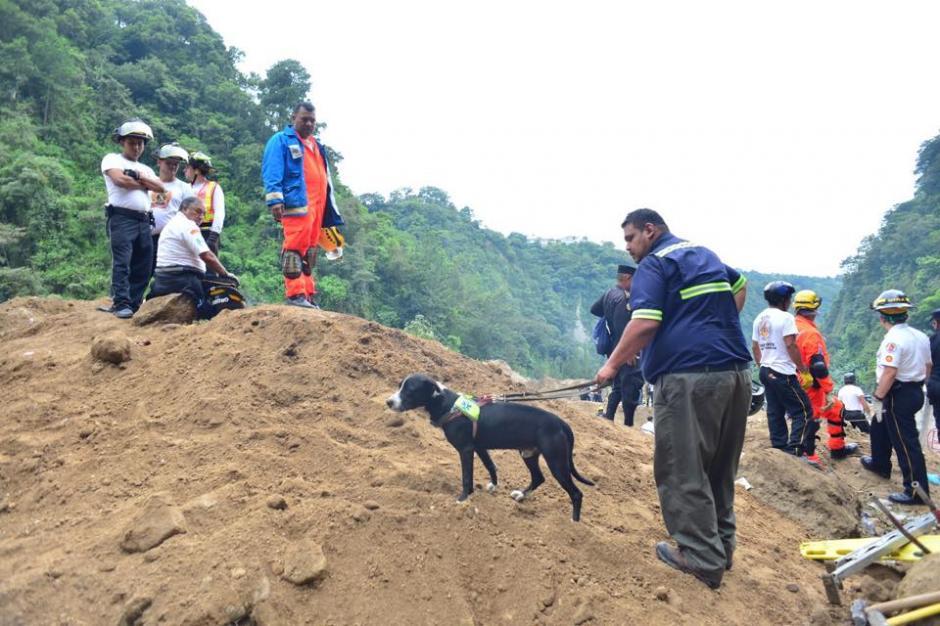 Placo es un perrito rescatista mexicano, que apoya las labores de rescate de las víctimas. (Foto: Jesús Alfonso/Soy502)