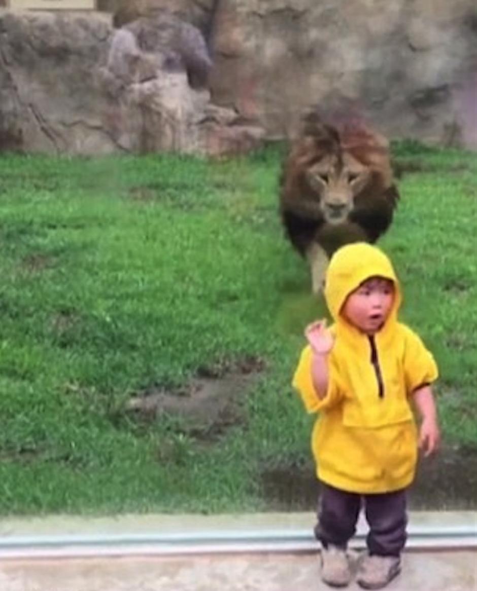 El niño estaba disfrutando del león y no se esperaba un susto así. (Foto: DailyMail)