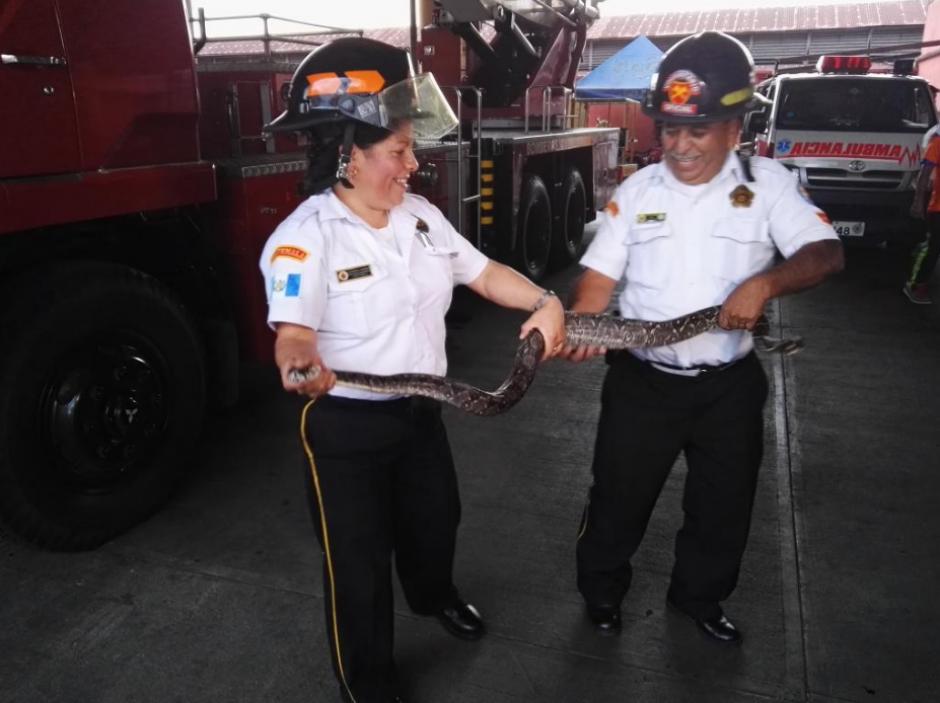 La serpiente viajó en un vehículo desde Zacapa. (Foto: Bomberos Voluntarios)