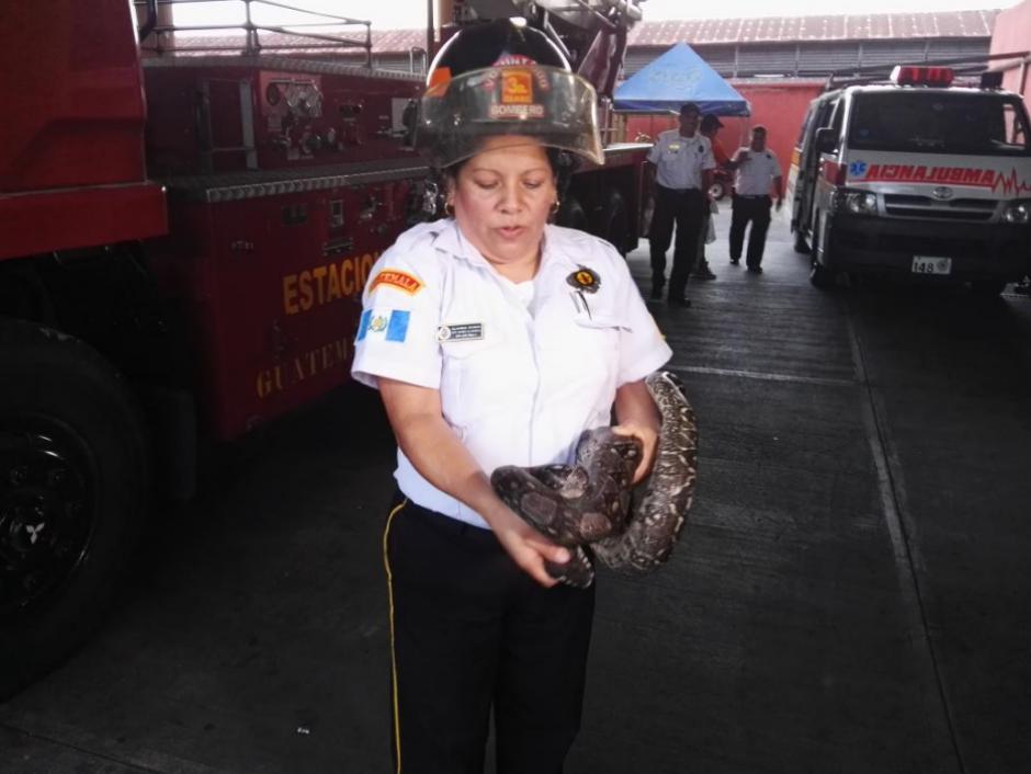 Encontraron al reptil dentro del motor del vehículo. (Foto: Bomberos Voluntarios)