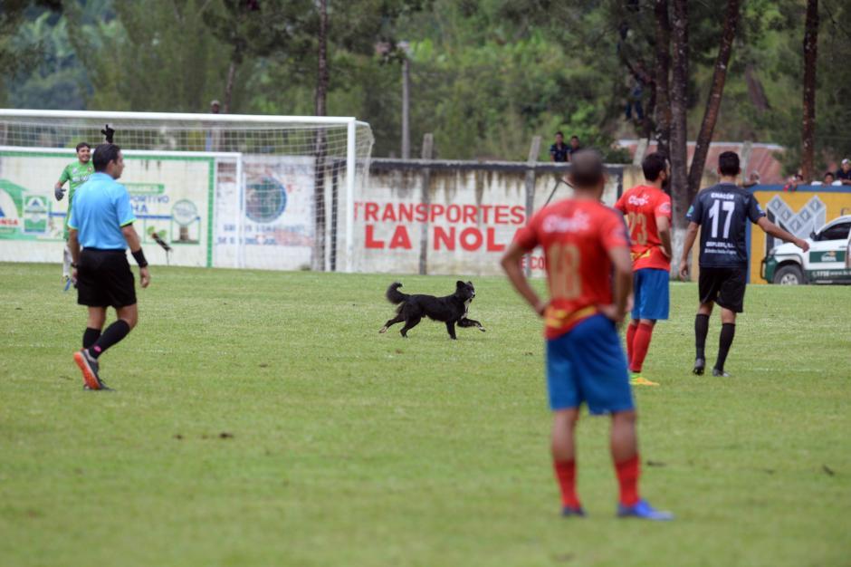 El perro corrió por la cancha antes de ser atrapado. Fue el que más se divirtió durante el juego. (Foto: Diego Galiano/Nuestro Diario)