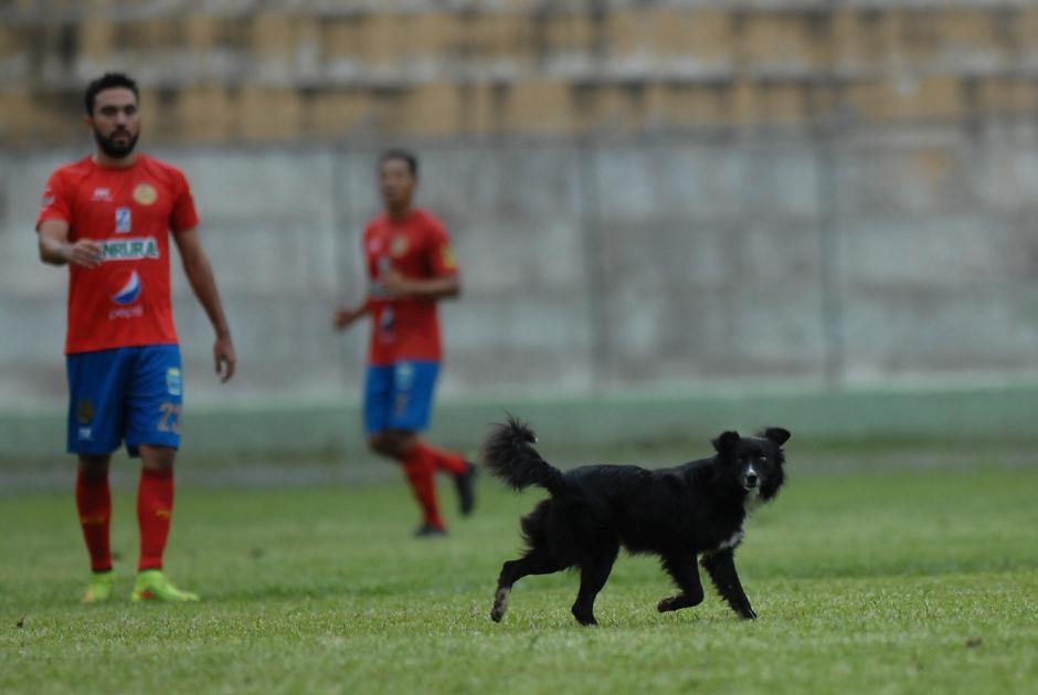 Carlos Kamiani observa al perro que ingresó sin permiso al terreno de juego. (Foto: Diego Galiano/Nuestro Diario)