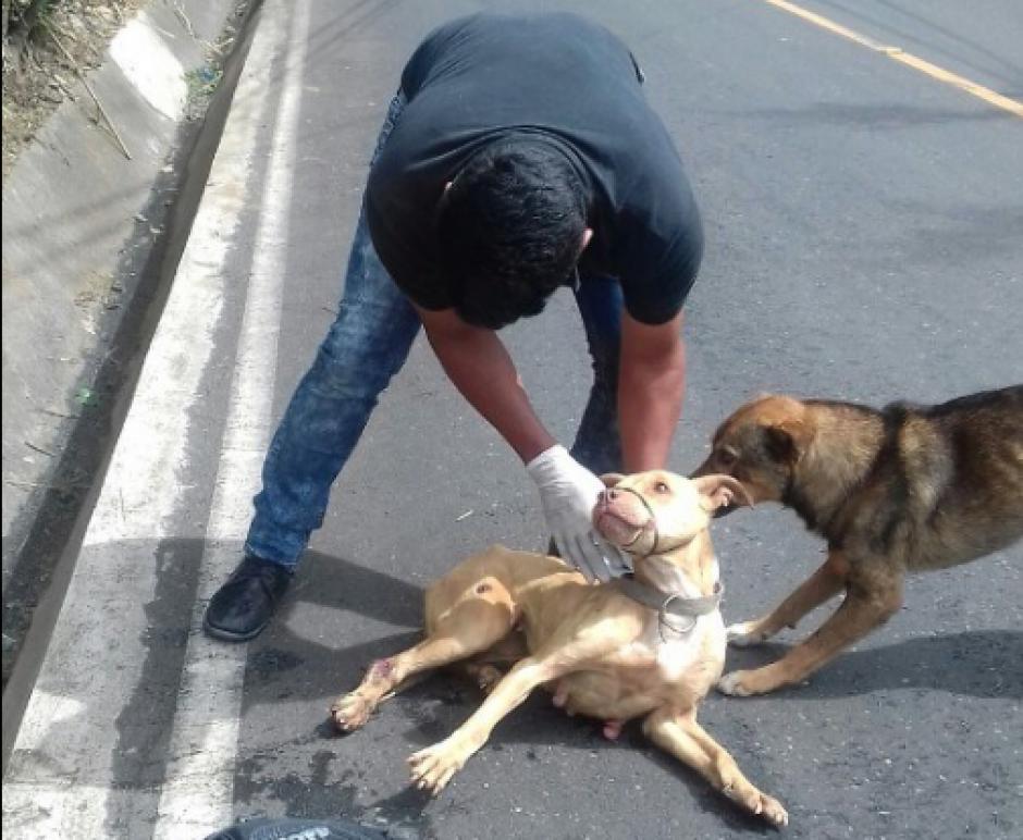Los integrantes de Huellitas de la Calle rescatan a una perra y su fiel amigo trata de impedir que la lastimen. (Captura de pantalla: Huellitas de la Calle/Facebook)
