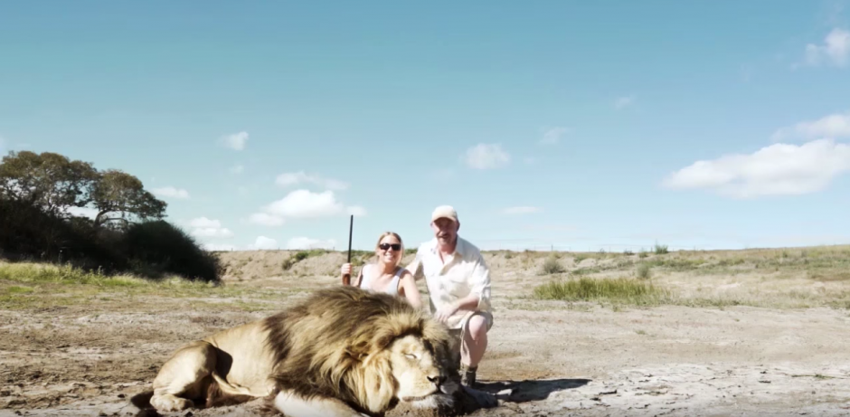 Pese a todo, el león no proyecta su sombra sobre ellos. (Captura de pantalla: Jayden Tanner/YouTube)