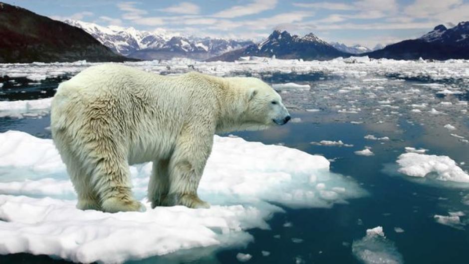 La fauna de la Antártica podría sufrir cambios por el deshielo. (Foto: Twitter)