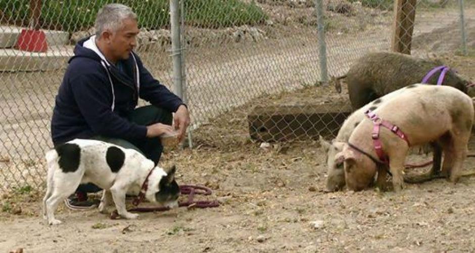 Las imágenes muestran que César y su manada de animales ayudaron eficazmente a Simon para superar su comportamiento agresivo. (Foto: Facebook)