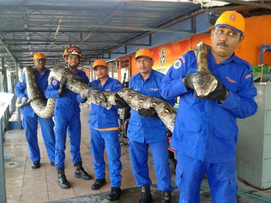 La serpiente más larga del mundo foto