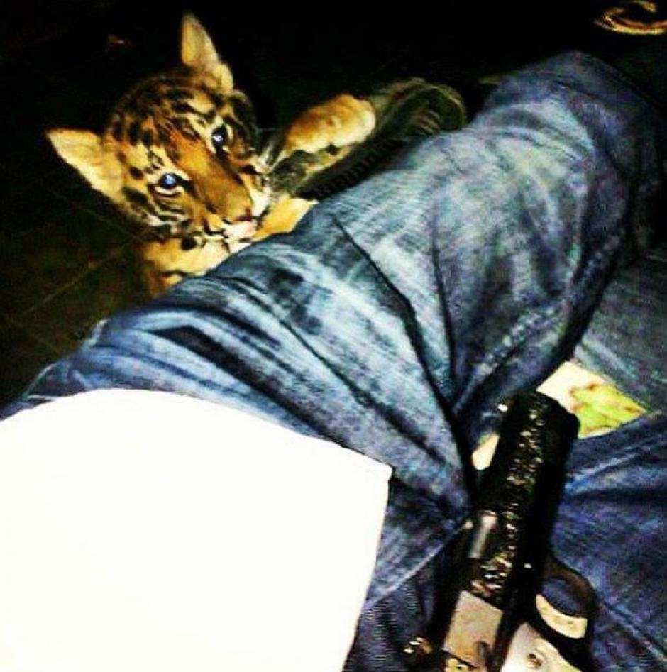 Animales exóticos son el lujo más ostentoso de los jóvenes. (Foto: excelsior.com.mx)
