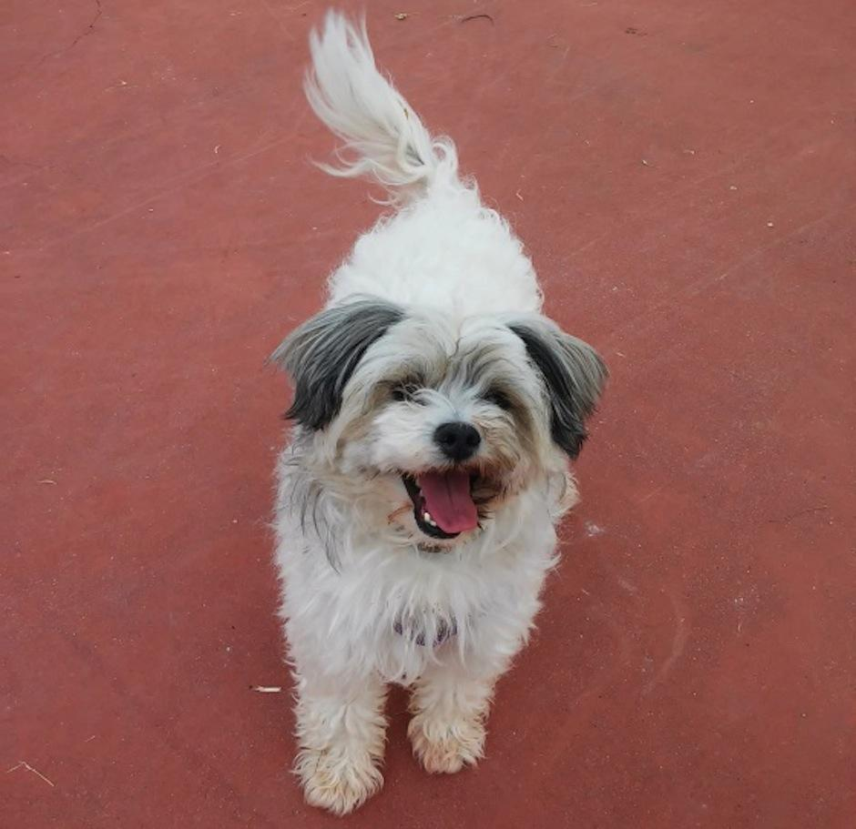 Tove es una lindo perrito que cambió la vida de esta familia. (Foto: El país)