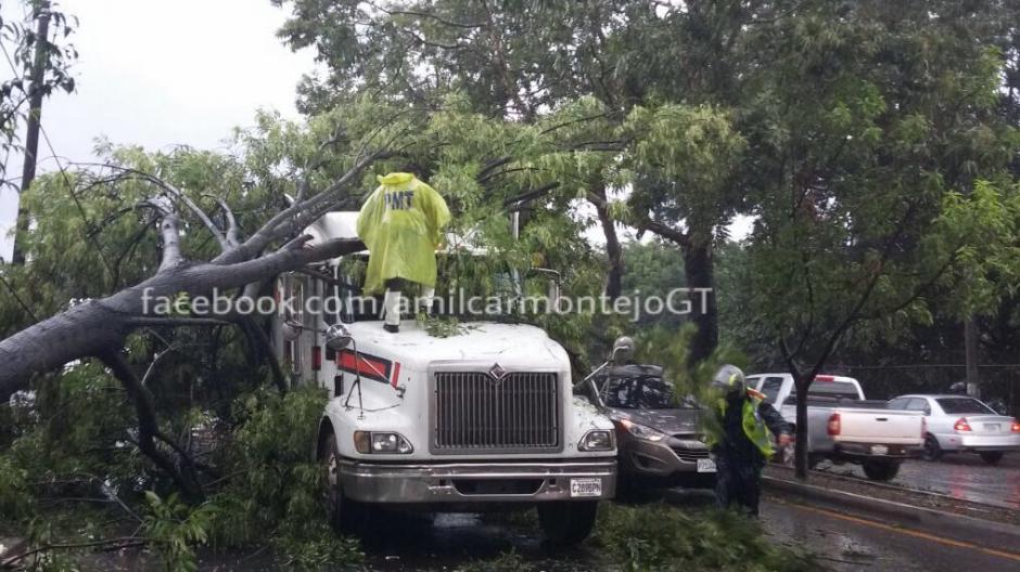 La PMT de Guatemala informó que un árbol se desplomó en la calzada Roosevelt. (Foto: Twitter)