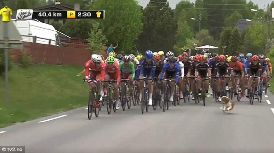 El incidente tuvo lugar durante el Tour de Noruega. (Foto: dailymail.co.uk)