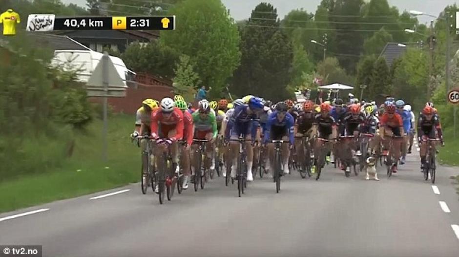 Ni los ciclistas ni el perro sufrieron heridas de gravedad. (Foto: dailymail.co.uk)