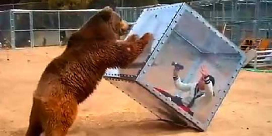 Enorme oso ataca a mujer en Japón foto