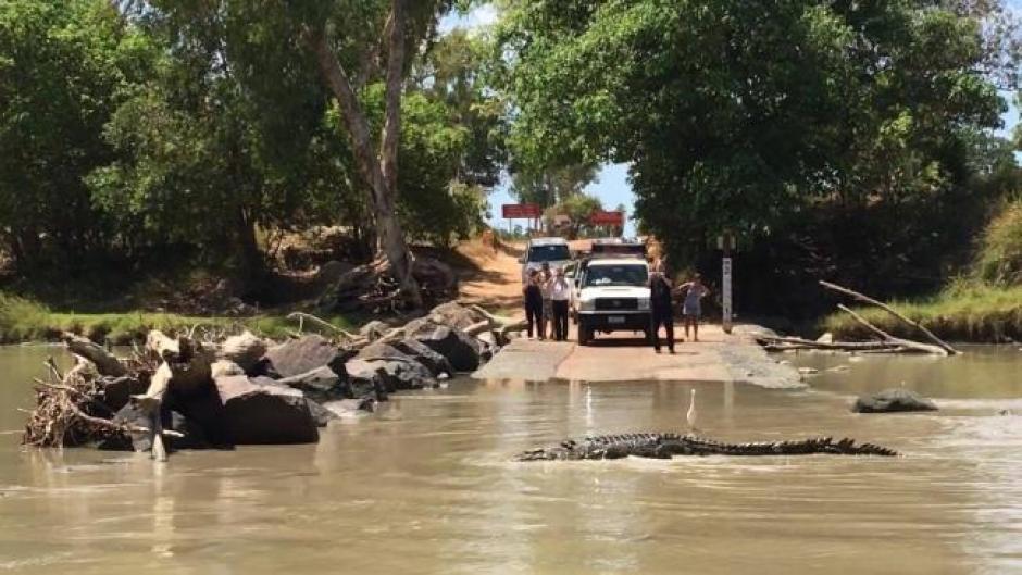 Los cocodrilos fueron grabados en Australia. (Foto: NT News)