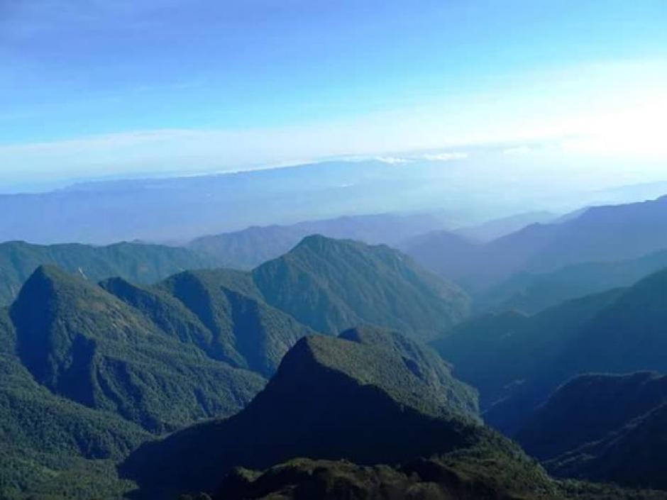 Denuncian tala ilegal en Sierra de las Minas. (Foto: Internet)